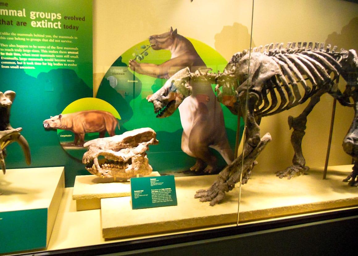 Oase de dinozaur