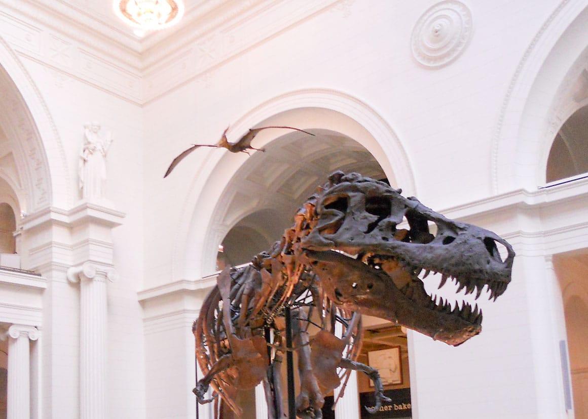 Tiranozaur și pterodactil